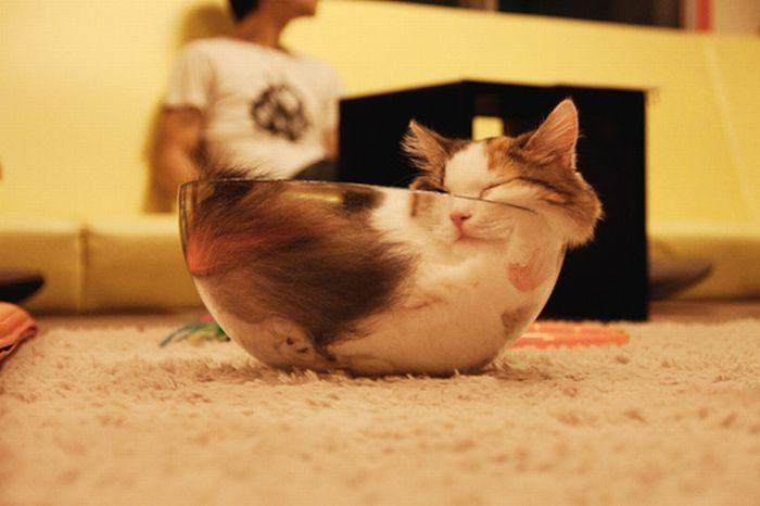 Vediamo insieme laspettativa di vita dei gatti.