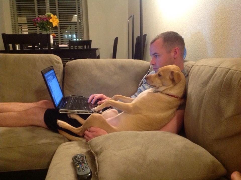 Risultati immagini per cane e gatto sul divano