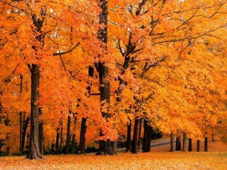 autunno alberi arancioni