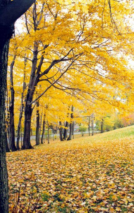 autunno foglie...