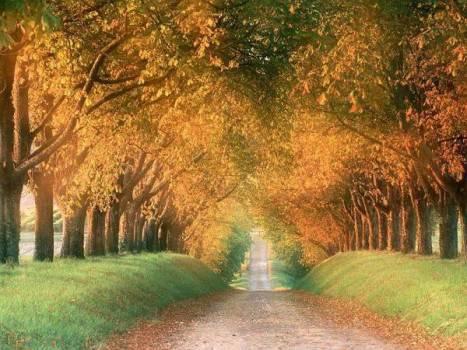 autunno..