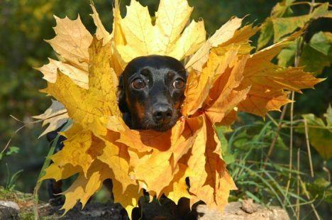 mimetizzato cane