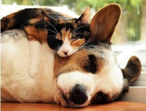 Risultati immagini per cane e gatto che dormono insieme