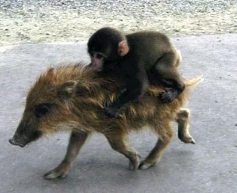 funny_animals_cm_20120328_00563_002