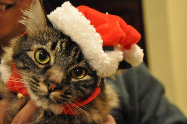 gatti natalizi persbaglio On gatti natalizi