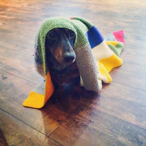 funny_animals_20140207_03618_006