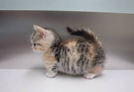 kitten-pictures-fluffy