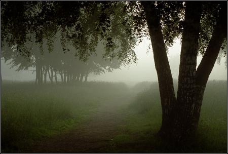 bosco notturno