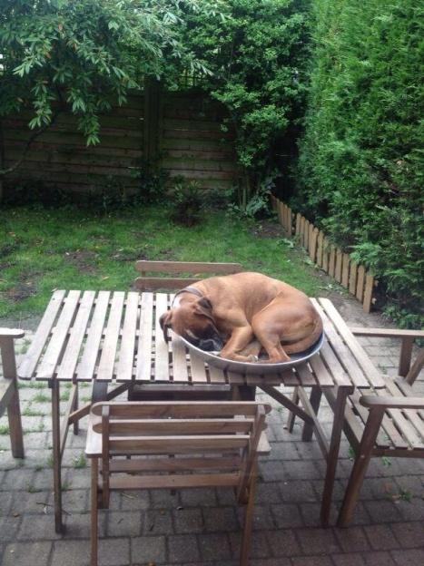 funny_animals_03936_022