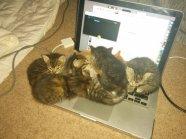 funny_animals_03949_030
