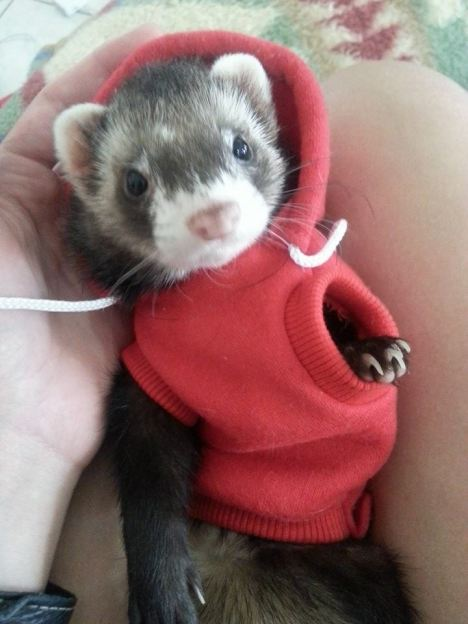 funny_animals_03991_022