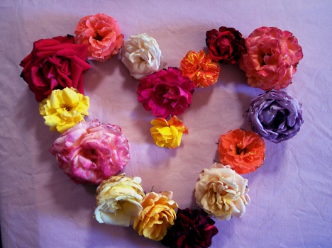 cuore-rose