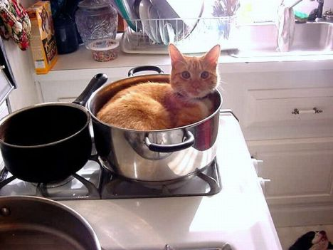 cats_find_the_oddest_places_to_get_comfortable_04184_025