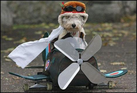 Aviator(DoggyStyle ) [800x600]