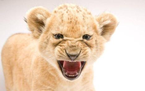 funny_animals_04362_024