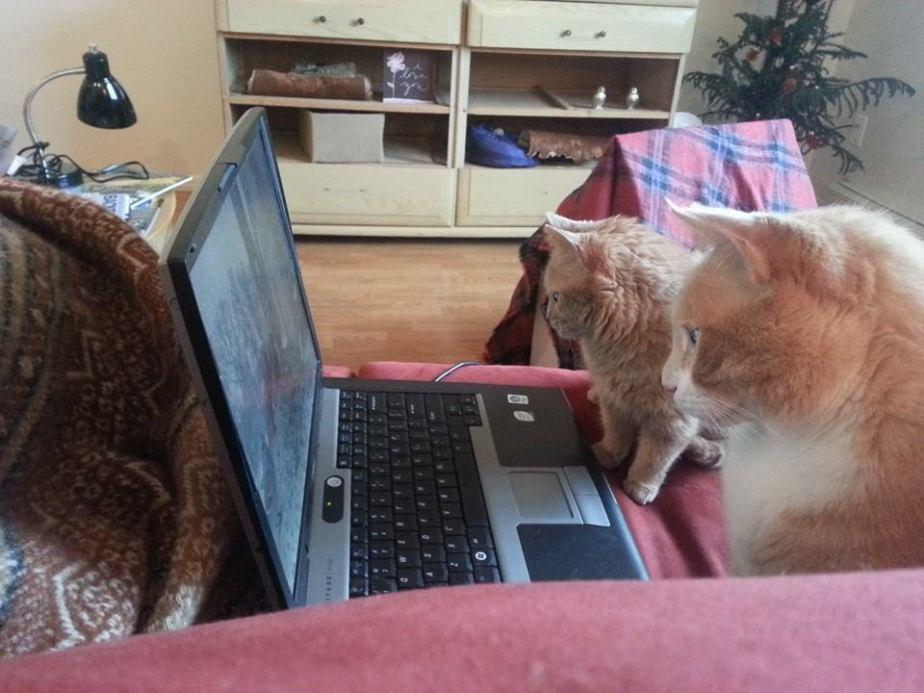 funny_animals_04421_012