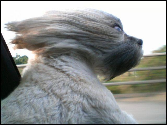 wind blown look s [640x480]