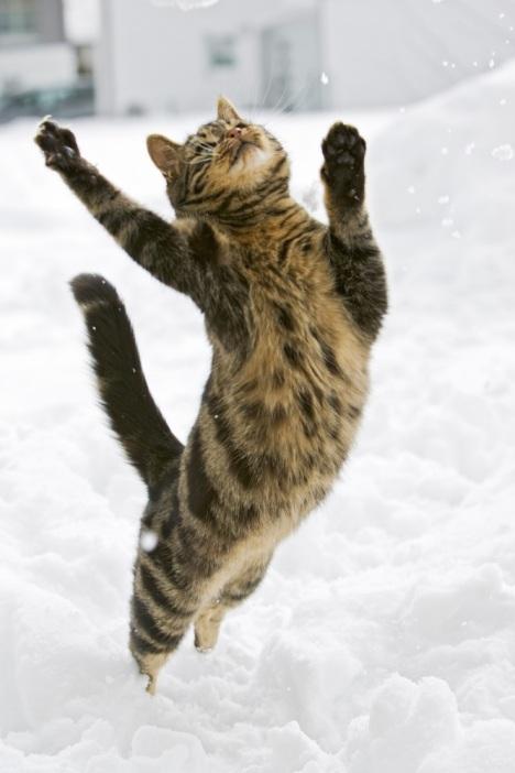 Gatti delle nevi persbaglio - Immagini da colorare la neve ...