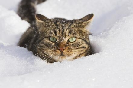 Un gatto delle nevi mentre compie il proprio lavoro di scavo della neve