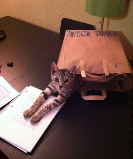 il-gatto-nella-busta