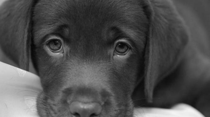 Risultati immagini per foto cani in bianco e nero
