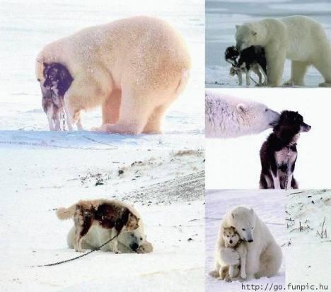 orso e cane...amici