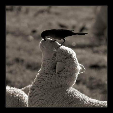Vogelreinigung