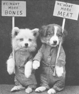 Funny Animal Photographs of The Early of The 19th Century (4)