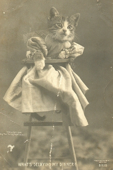 Funny Animal Photographs of The Early of The 19th Century (6)