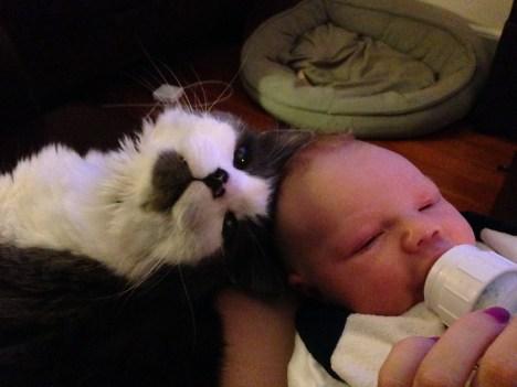 funny_animals_04393_002