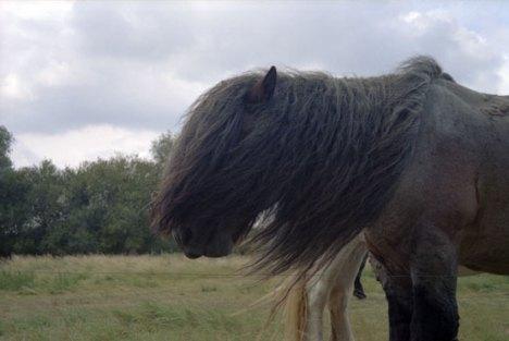 cavallo-al-vento