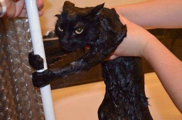 Bella bagnato nero micio pics