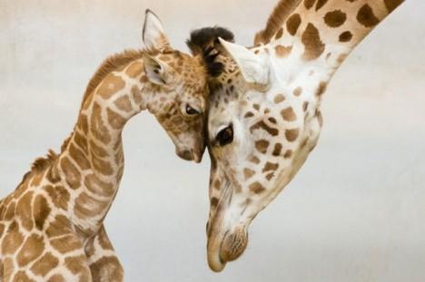 1667115274_genitori_animali_8