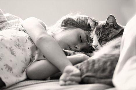 Bambini-e-gatti-niente-paura-3