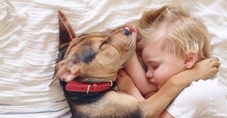 cane-cani-e-bambini-5-consigli-per-una-corretta-amicizia