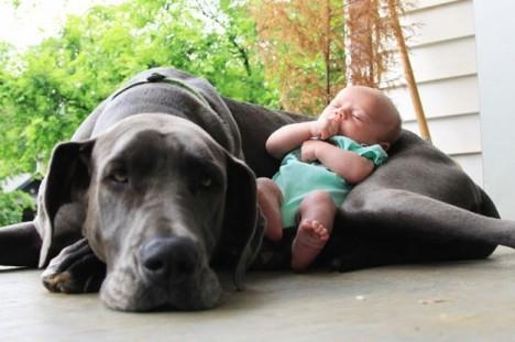 il-migliore-amico-del-bambino