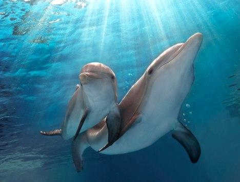 mamma-delfino
