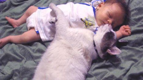 salute-neonati-e-animali