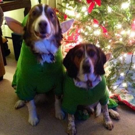 animali-vestiti-per-natale-elfi