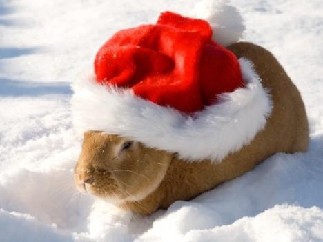 christmas-bunny2
