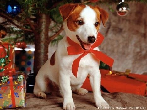 Christmas-Dog-christmas-16092050-800-600