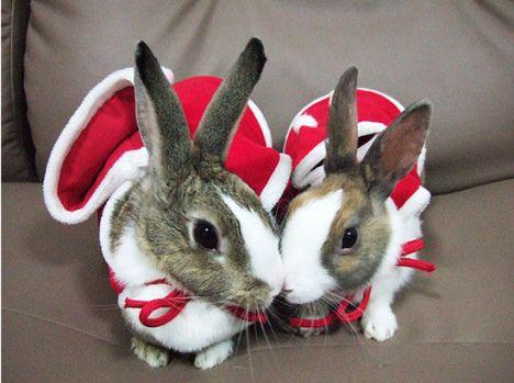 coniglietti-natalizi