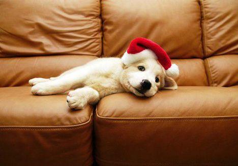 cucciolo-con-cappello-di-natale+animali natalizi