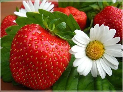 fruits_002