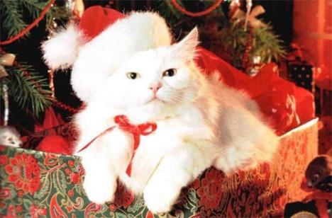gatti-regalo-natale1.jpg