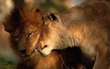 leoni... coccole