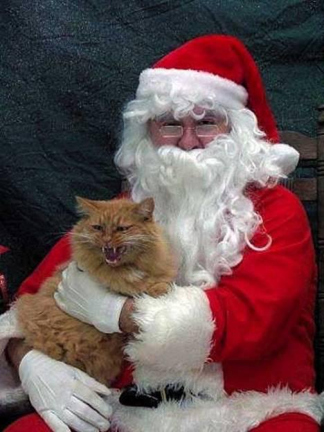 santa-lap-cat-angry