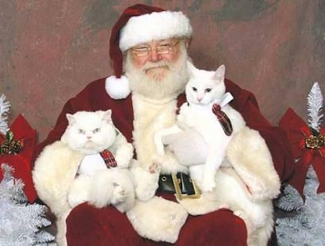 santa-lap-cat