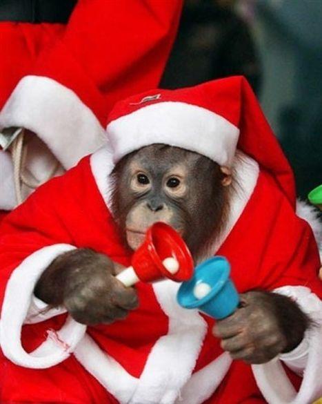 scimmia-natalizia-600