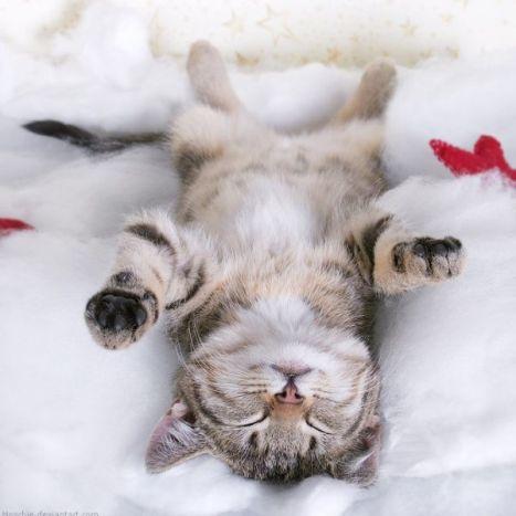 013_kitty